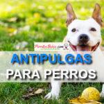 antipulgas y garrapatas para perros