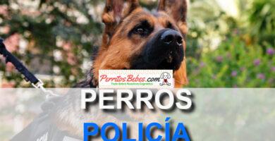 perros policias pastor aleman