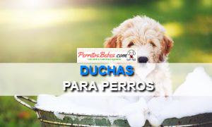 Duchas para Perros: Las Mejores Opciones de Aseo para Canes