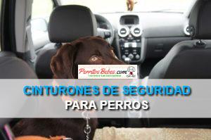 Cinturones de Seguridad para Perros: Confiables, Prácticos y Seguros