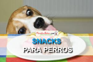 Snack para perros