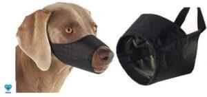 bozal para perros