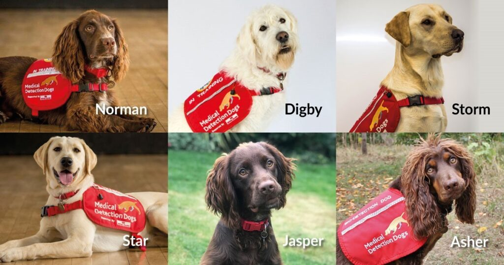 Perros Entrenados para Detectar el Covid 19