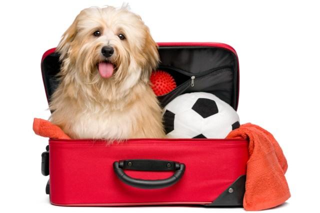Permiso De Viaje Para Mascotas