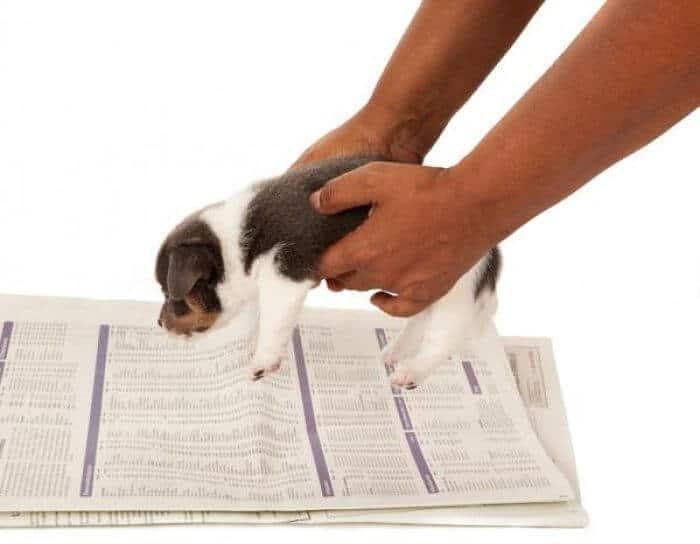 cachorro aprendiendo a hacer sus necesidades