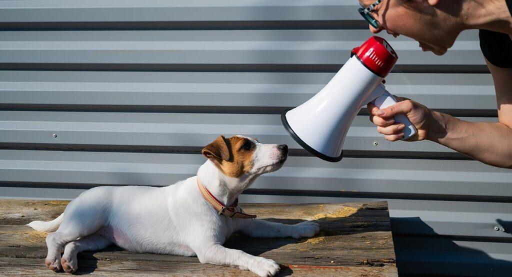 cuanto aguanta un perro sin hacer sus necesidades