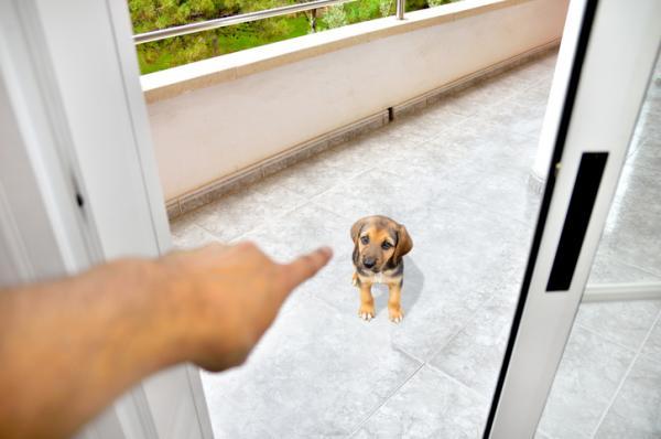 cuanto aguanta un perro sin hacer pupu
