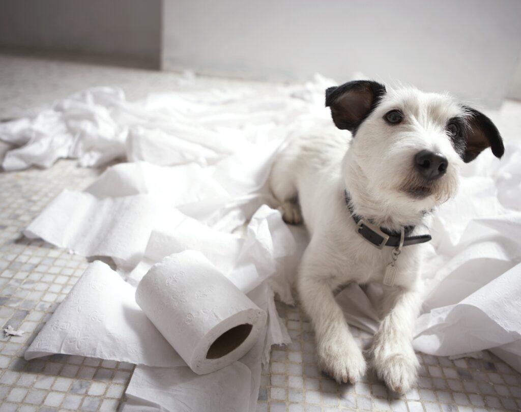 cuanto tiempo aguanta un perro sin hacer sus necesidades