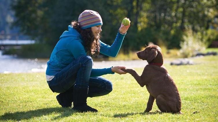 cuanto puede aguantar un perro sin hacer sus necesidades